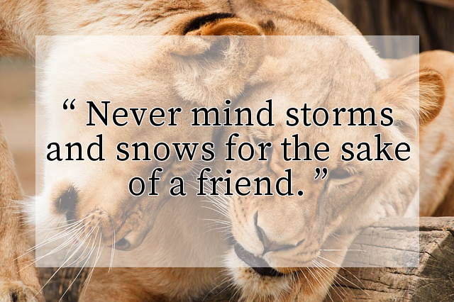 Never mind storms and snows for the sake of a friend.
